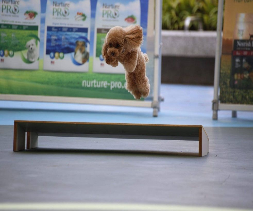 Basic Dog Obedience Classes by Singapore