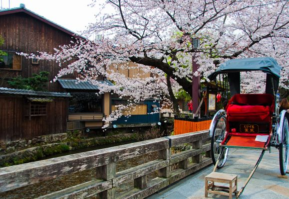 A Japanese rickshaw in Gion, Kyoto with overhanging cherry blossoms make for a perfect backdrop for a romantic snapshot