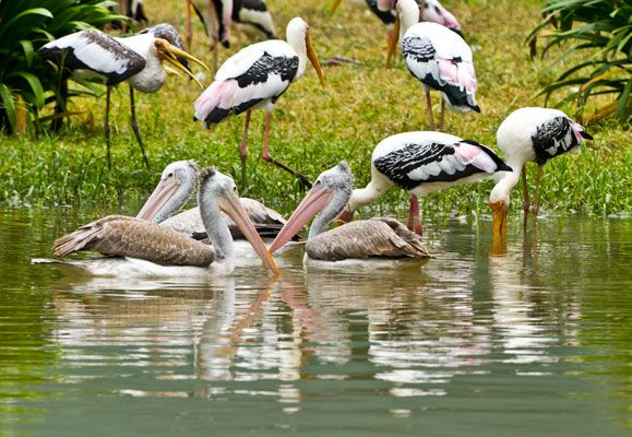 Bangalore never gets too warm or too cold no matter the season, making it perfect for visiting several of its outdoor wildlife attractions