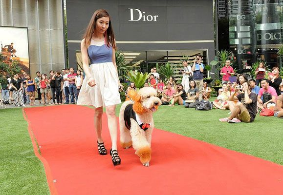 Owner Charmaine and her Standard poodle, Royce owned the petwalk as they strutted with flair and style at the Pets' Day Out 2014 event held at ION Orchard