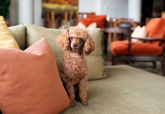 There is no reason why your home cannot be stylish as well as safe for your pet if you know how to do it right
