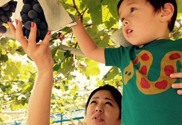 Yasue Fukuhara, Assistant Manager at Citadines Shinjuku Tokyo and her son picking grapes at the Ogiwara Fruit Farm in the Yamanashi Prefecture
