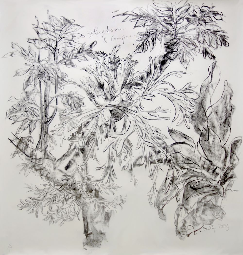 Staghorn and Company (Remembrance of Trees Past, Nassim Hill Atelier)