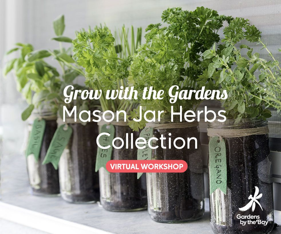 Grow with the Gardens - Mason Jar Herbs Collection Virtual Workshop by Gardens by the Bay